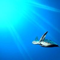 Umweltfreundliche Strohhalme ohne Plastik