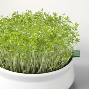 Sprouted Seeds Cress Organic, 100g